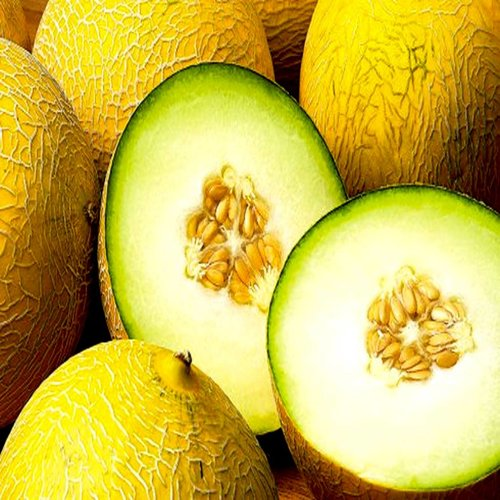 CLASSIC - Galiameloen - Fruitsiroop