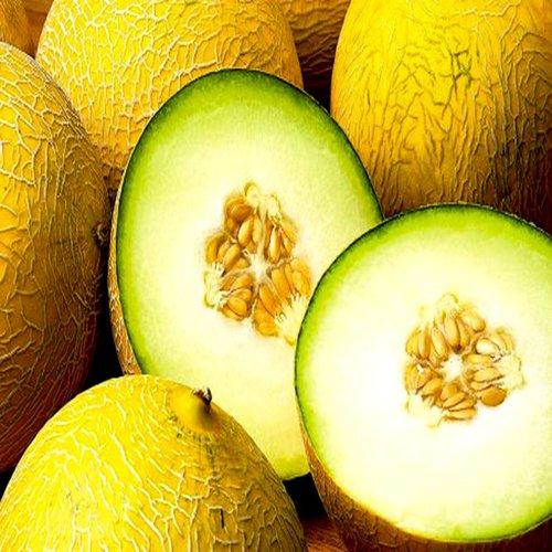 - Melón galia - Jarabe de frutas