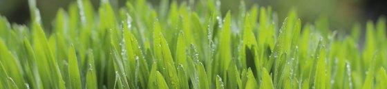 Beliebte Arten von Microgreens
