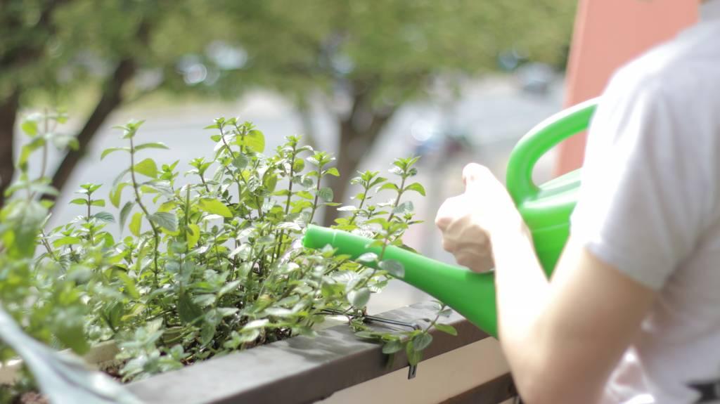 Urban Gardening Challenge 2017 - Sei dabei!