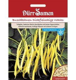 Dürr Samen Buschbohnen  Gelbe Wachs