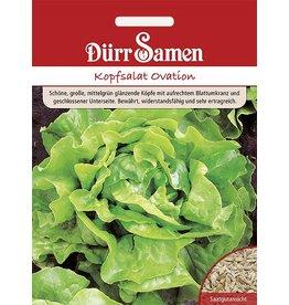 Dürr Samen Kopfsalat  Ovation