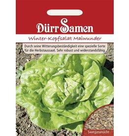 Dürr Samen Kopfsalat  Winter-Maiwunder