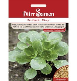 Dürr Samen Feldsalat  Favor (Vorteilspackung)