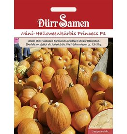 Dürr Samen Mini-Halloween-Kürbis  Harvest Princess F1