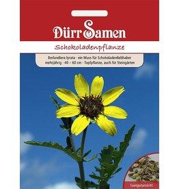 Dürr Samen Schokoladenpflanze Gelb mit Schokoladenduft, mehrjährig, 40–60cm