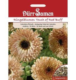 Dürr Samen Ringelblumen  Touch of Red Buff, einjährig, 50-60cm