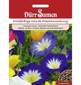 Dürr Samen Convolvulus Dreifarbige Winde Mischung Prachtmischung, einjährig, 40-50cm