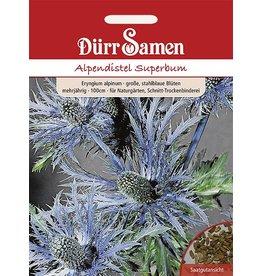 Dürr Samen Alpendistel Superbum Stahblaue Blüten, mehrjährig, 100cm