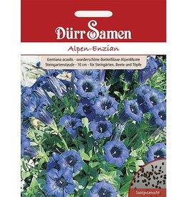 Dürr Samen Alpen-Enzian Großtüte mehrjährig, 10cm
