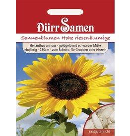 Dürr Samen Sonnenblume  Hohe, riesenblumige, goldgelb mit schwarzer Mitte, einjährig, 250cm
