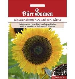 Dürr Samen Sonnenblume  American Giant, gelbe Blüten mit schwarzen Scheiben, einjährig, bis zu 400cm
