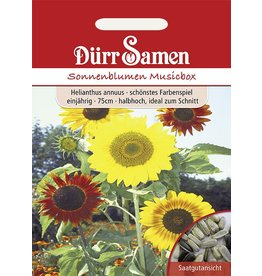 Dürr Samen Sonnenblume  Musicbox, Prachtmischung, einjährig, 75cm