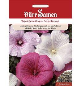 Dürr Samen Bechermalve  Mischung, weiß und rosa, einjährig, 60cm