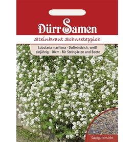 Dürr Samen Steinkraut  Schneeteppich, weiß, einjährig, 10cm