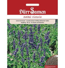Dürr Samen Salvia horminum Victoria Victoria, tiefblau, einjährig, 60cm