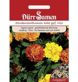 Dürr Samen Studentenblumen  Hohe gefüllte Mischung, einjährig, 70cm
