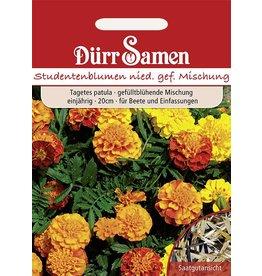 Dürr Samen Studentenblumen Niedere gefüllte Mischung, einjährig, 20cm
