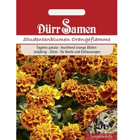 Dürr Samen Studentenblumen  Orangeflamme, leuchtend gelb-orange Farbe, einjährig, 20cm