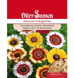 Dürr Samen Sommer-Margeriten