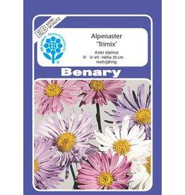 Benary Alpenaster Trimix, mehrjährig