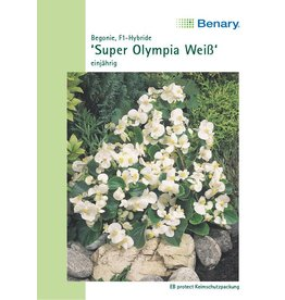 Benary Begonien Super Olympia® F1 Weiß, einjährig