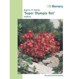 Benary Begonien Super Olympia® F1 Rot, einjährig