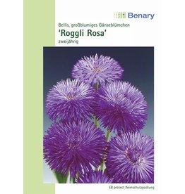 Benary Gänseblümchen Roggli Rosa, zweijährig