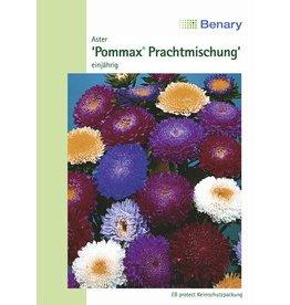 Benary Aster Pommax® Prachtmischung, einjährig