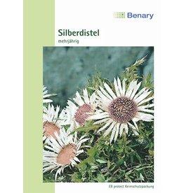 Benary Silberdistel Simplex, mehrjährig