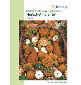 Benary Zierkürbis Herbst-Ambiente, einjährig