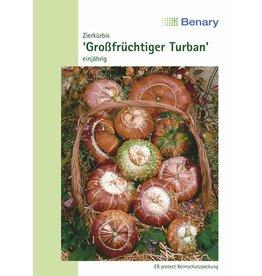 Benary Zierkürbis Großfrüchtiger Turban, einjährig