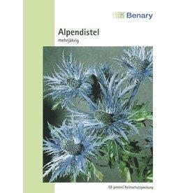Benary Alpendistel Superbum, Mannstreu, mehrjährig