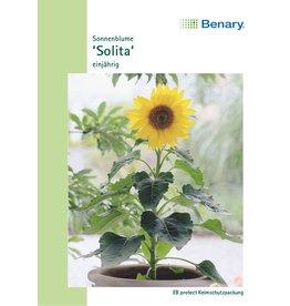Benary Sonnenblume Solita, einjährig