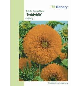 Benary Gefüllte Sonnenblume Teddybär, einjährig