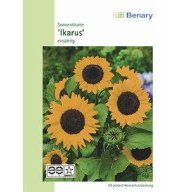 Benary Sonnenblume Ikarus, einjährig