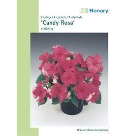 Benary Fleißiges Lieschen Candy® F1 Rosa, einjährig