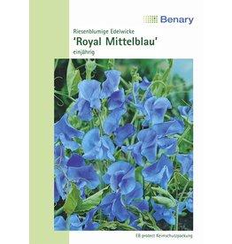 Benary Edelwicke Royal Mittelblau, einjährig
