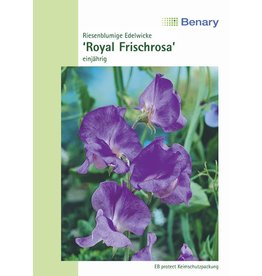 Benary Edelwicke Royal Frischrosa, einjährig