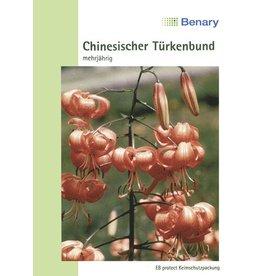 Benary Chinesischer Türkenbund Mehrjährig
