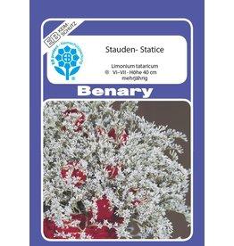 Benary Stauden-Statice Mehrjährig