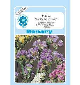 Benary Statice  Pacific Mischung, mehrjährig