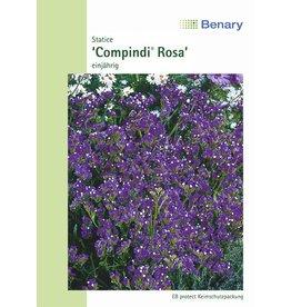 Benary Statice  Compindi® Rosa, mehrjährig