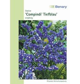 Benary Statice  Compindi® Tiefblau, mehrjährig