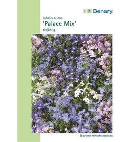 Benary Männertreu Palace Mix (Multipille), einjährig
