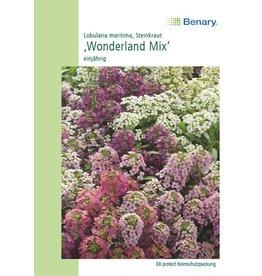Benary Duftsteinrich Wonderland Mix, einjährig