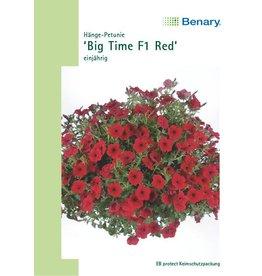 Benary Petunie Big Time F1 Red, einjährig