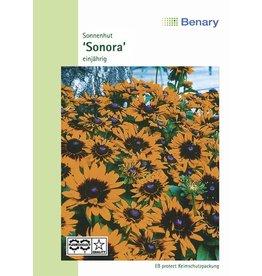 Benary Sonnenhut Sonora, einjährig
