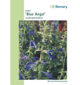Benary Salbei Blue Angel, einjährig