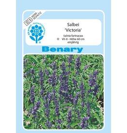 Benary Ziersalbei Victoria®, einjährig